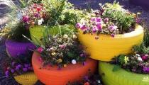 فكرة حلوة لزرع احواض ورد